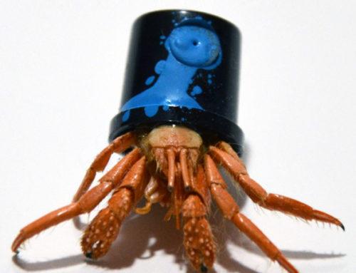 Crab Cap Armada serie